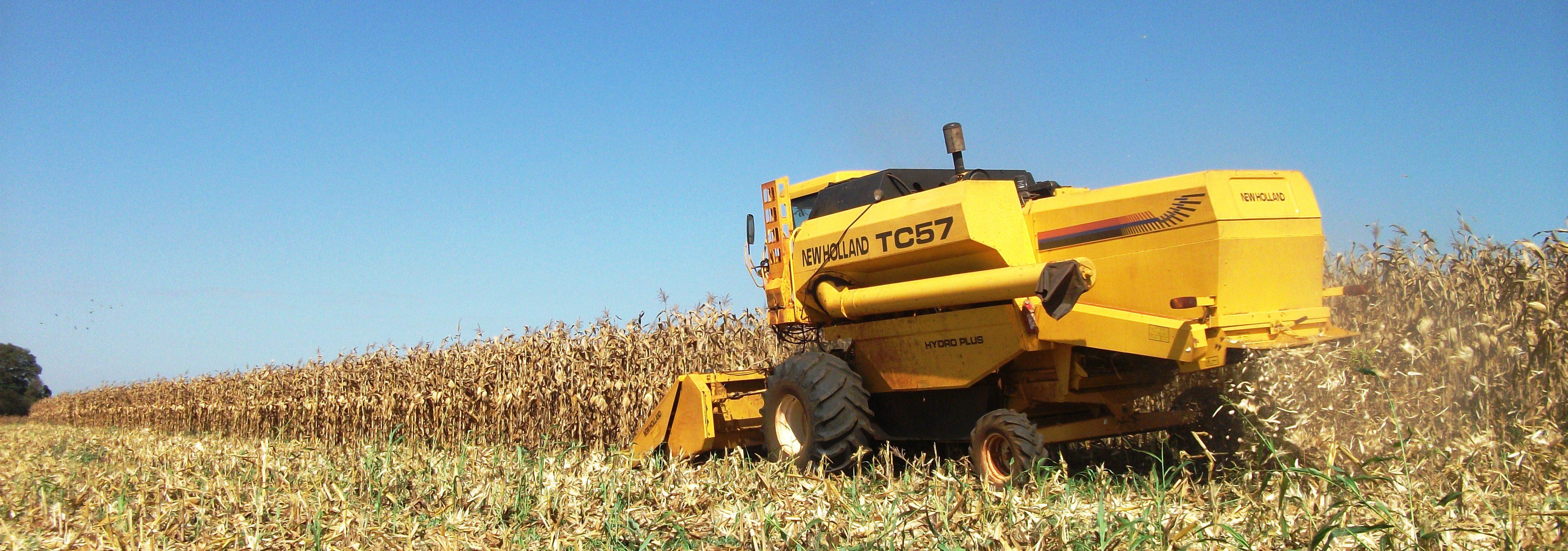 Resultado de imagem para Colheita do milho